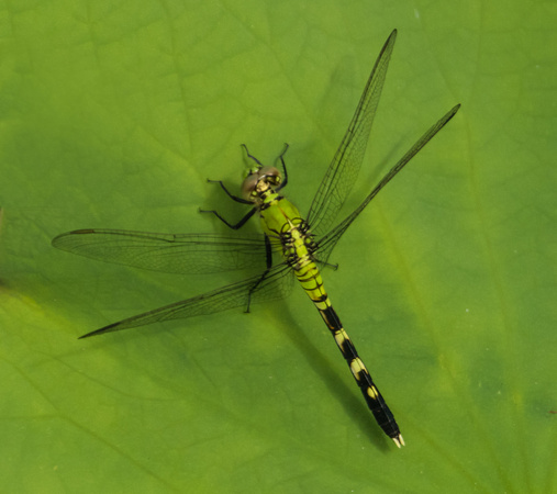 8-20-16 Dragonfly-8101060