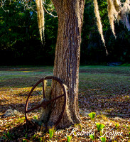-12-14-14 Botany Bay Plantation-0511